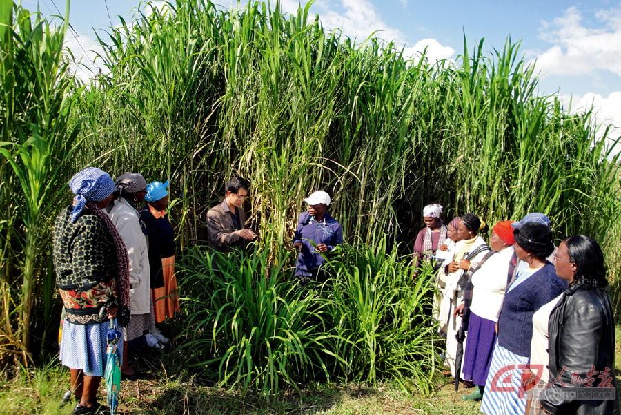 """龙8国际娱乐官方网站_""""种植""""幸福的中非农业合作"""